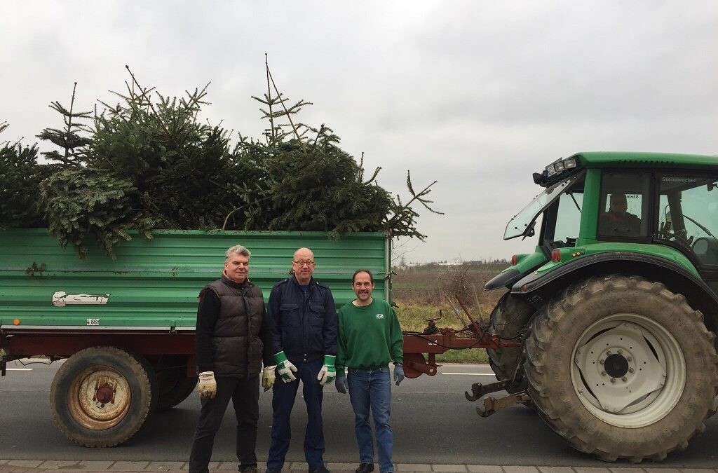 SPD-Weihnachtsbaumsammlung in Wackernheim: Samstag, 11. Januar 2020, ab 9.00 Uhr