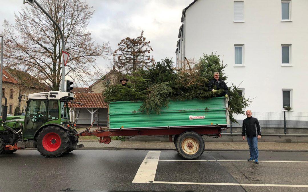 SPD sammelt bei Wind und Regen Weihnachtsbäume ein